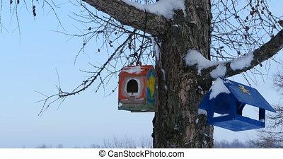 bird feeders on a tree