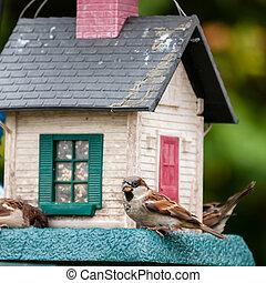 bird feeders. tree house for the birds, cheerful apartmen