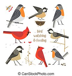 Bird feeding poster - Birdwatching, bird feeding icon set. ...