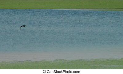 Bird flies and lands on blue green water