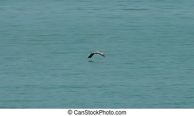 Bird flies low over turquoise water