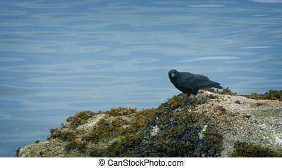 Bird Flies Off Rocks By The Water - Bird on the rocks flying...