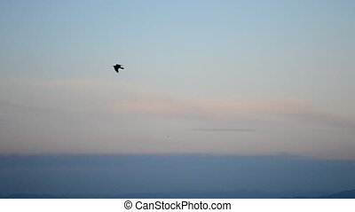 Bird flies on background of blue sky in mountains during sunset