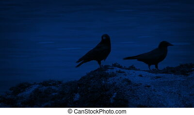 Bird Flies Onto Rock By The Water At Night - Bird flies onto...
