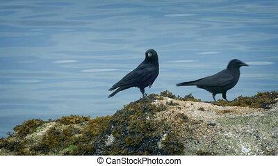 Bird Flies Onto Rock By The Water - Bird flies onto rocks...