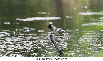 bird flies over water and sits on a branch
