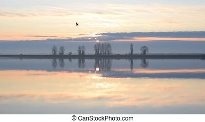 Bird flies over water through frame during sunrise in...