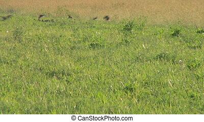 bird flock 08