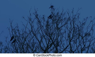 Bird Fly Off Tree Late In The Evening