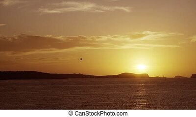 Bird fly past the sunset on Ibiza island