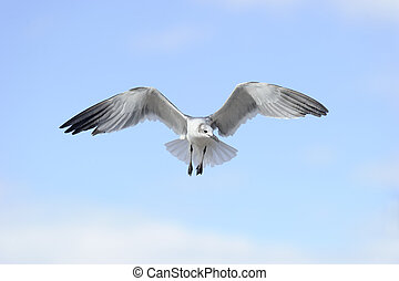 Bird Flying