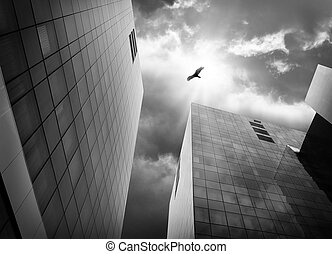 Bird Flying High in Sky in City with Buildings