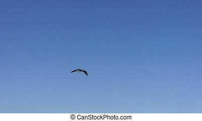 Bird flying in blue sky