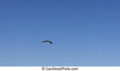 Bird flying in blue sky
