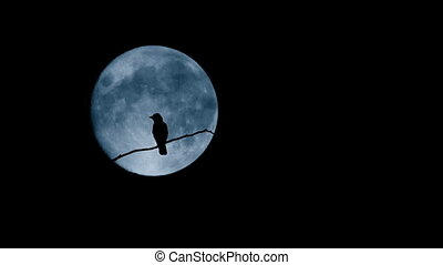 Bird Flying Off Branch In Front Of Large Moon - Bird on the...
