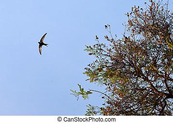 Bird flying over blue clear sky