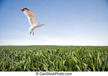 Bird flying over green grass