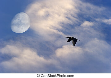 Bird Flying Silhouette Moon