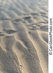 bird footprints in the sand