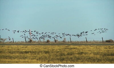 Bird formation - A flock of birds flying in formation