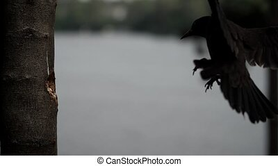 Bird grabs a nut from hole in tree in mid-air. - A Common...