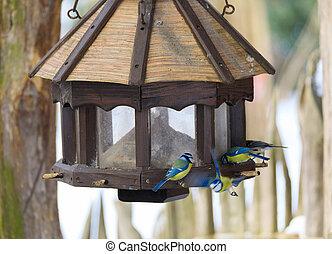 bird great tit in bird house, bird feeder