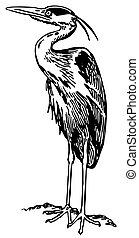 Bird Grey Heron