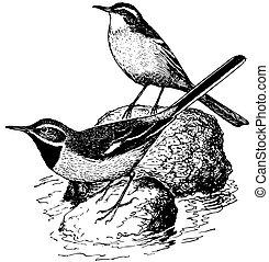 Bird Grey Wagtail
