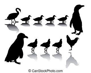 bird group - silhouette