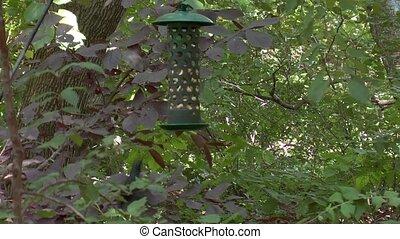 bird feeder - bird has some food from the bird feeder