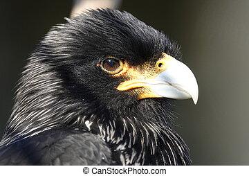 Bird head.