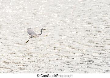 Bird (Heron, Bittern or Egret) in a nature wild - Bird (...