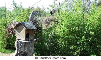 Bird house and stork