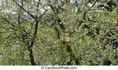 bird house bloom tree