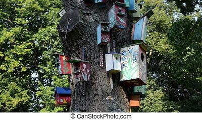 bird house dead tree - wooden bird nest boxes houses hang on...