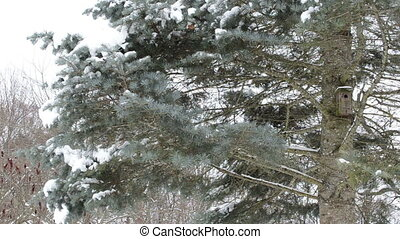 bird house fir tree snow