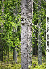 Bird house in the forest on the pine