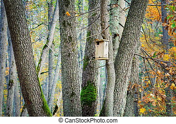Bird house in the forest on the tree