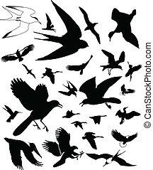 Bird Icons - Vector Bird icons. Isolated on white...