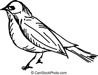 Bird, illustration, vector on white background.
