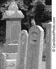 bird in a graveyard - Small bird perched on a headstone