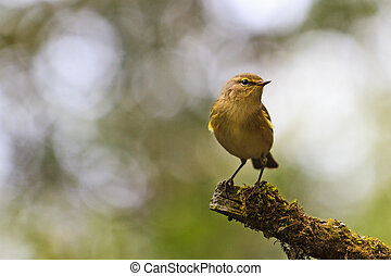 bird in forest thickets sitting on a branch