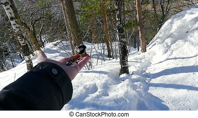 Bird in man's hand eat seeds - Titmouse bird in man's hand...