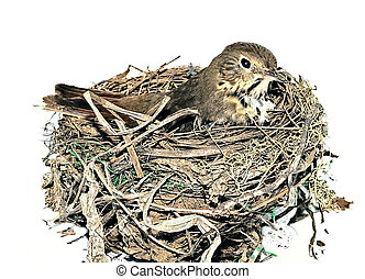 Bird in Nest