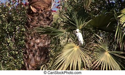 Bird In Palm Trees - Palm Trees