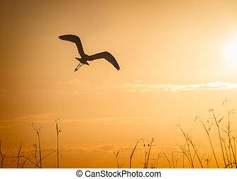 bird in silhouette