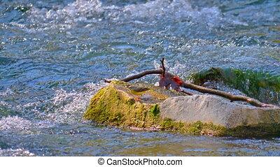 bird in speed river 4k