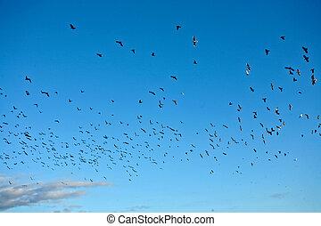 Bird in the blue sky in denmark