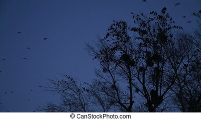 Bird in the dark - Many dark birds in the dusk
