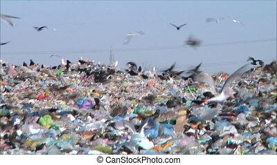 bird in the dump